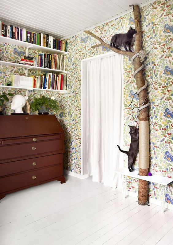 Home Design Tips for Cat Owners Happho