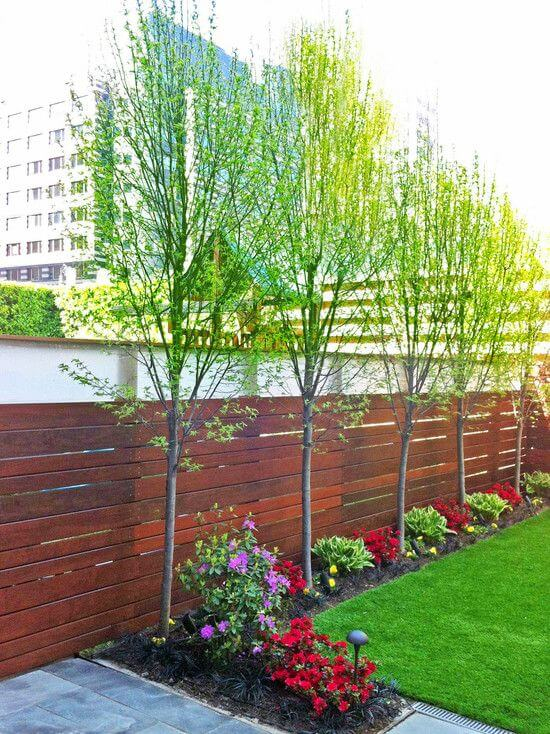 planting trees in building setback area